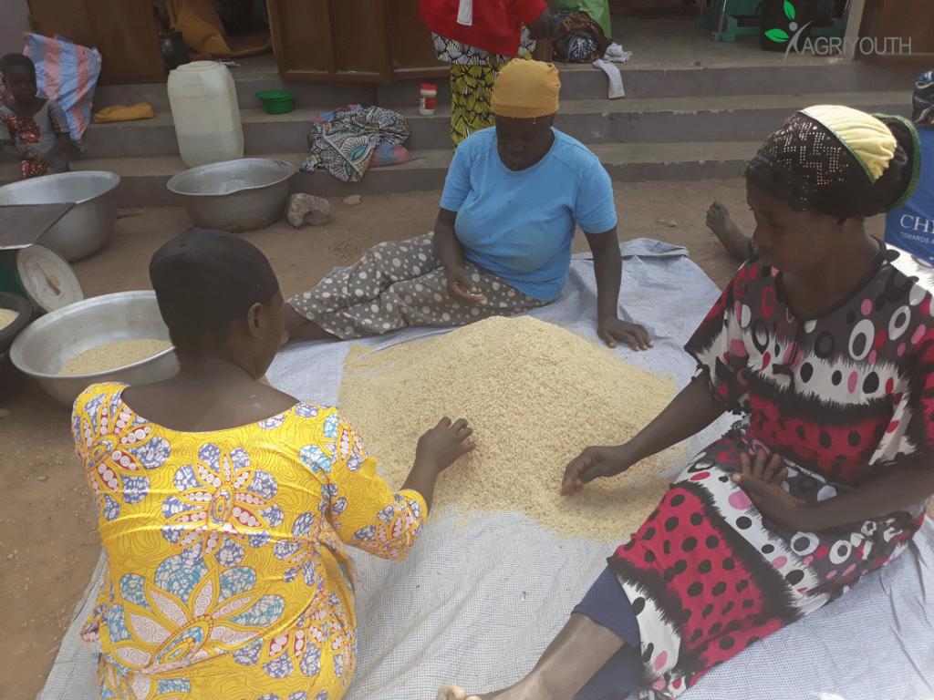 Les femmes étuveuses de riz en train de faire le tri du riz sur leur site.