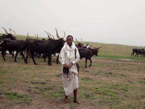 Abba Malloum YOUGOUDA avec son troupeau